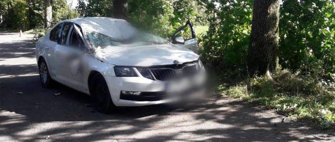 В Польщі через сильний вітер дерево впало на авто: водій загинув на місці