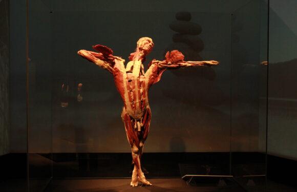 Всесвітньо відома виставка BODY WORLDS — «Всесвіт тіла» тепер у Вроцлаві