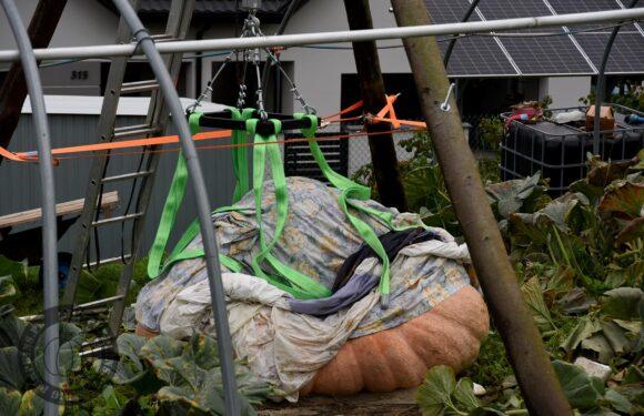 В Польщі виростили гарбуз, вагою майже 850 кг [+ФОТО]