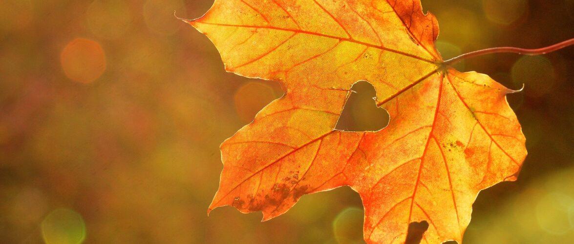 Теплий жовтень: на Польщу чекає навіть 20 градусів тепла