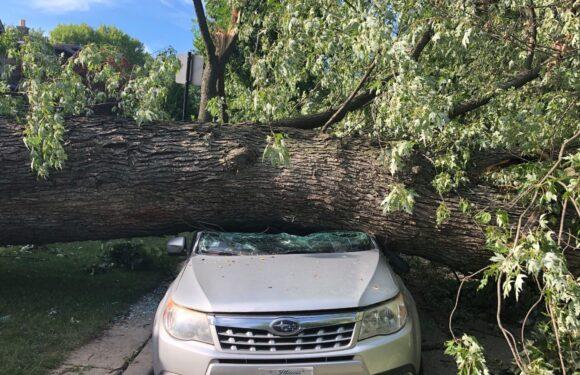Через негоду на авто в Польщі впало дерево: загинуло двоє людей
